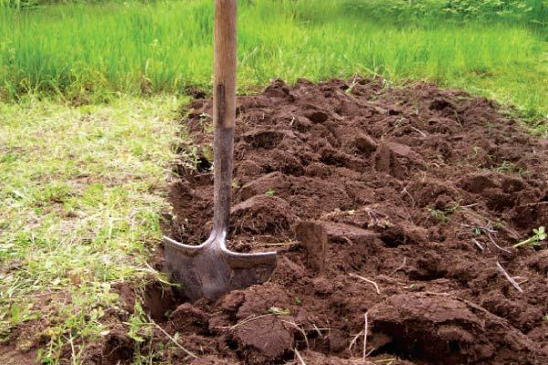 Выполняем любые виды земельных работ: - Копка траншей под фундамент - Копка бассейнов - Перекопка огородов и дачный участков - Переноска земли, песка, гпс, гравия - планировка земли